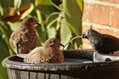 Bird Bath_5616