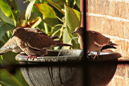 Bird Bath_5606