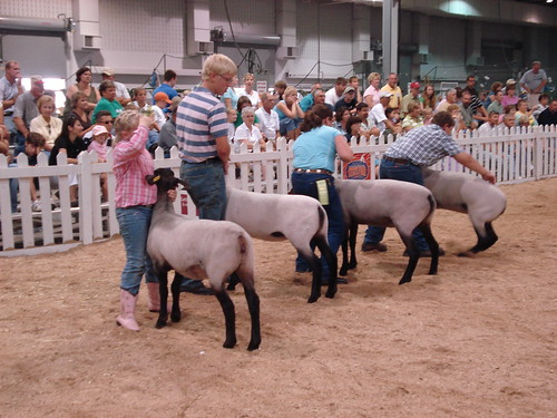 Ewe Competition