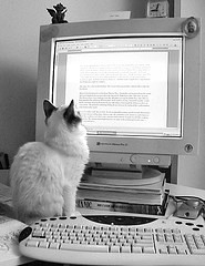 Even picky cats cannot proofread. Hire a professional proofreader or find a picky friend.