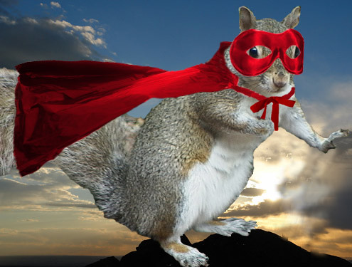 Super Squirrel Queen