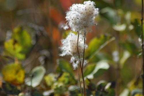 wild flowers in seed2