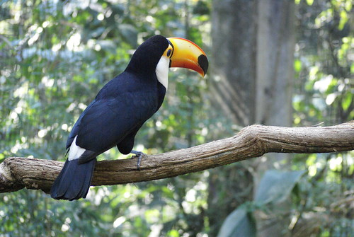 toekan in vogelpark Brazilie 2