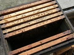 59.養蜂箱