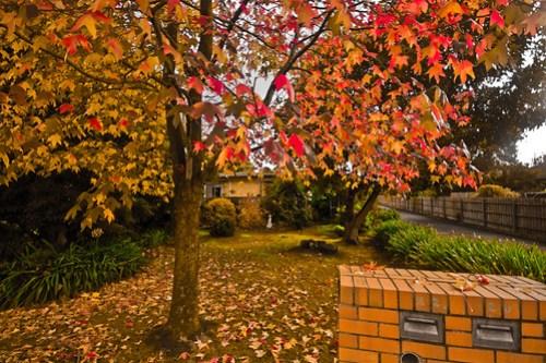 Outono - Autumn