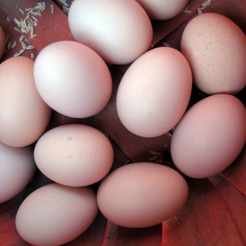 eggs from the happy hens
