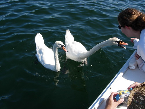 Catie Feeding Saltines to the Swans