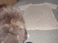 kitty and a sweater