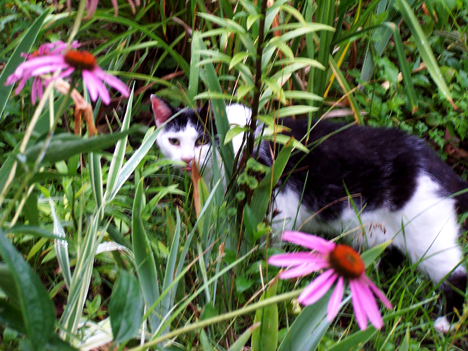 Coneflowers & Patches