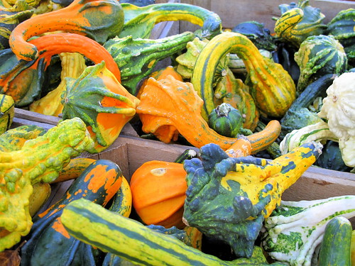 crazy gourds