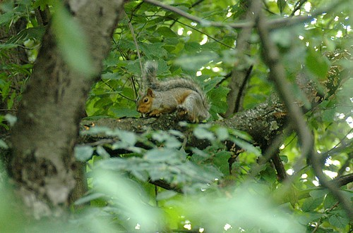 Squirrel from Squirrel Hill