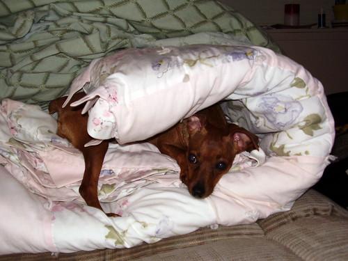 Ginger Blanket