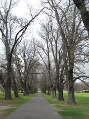 Fawkner Park, South Yarra
