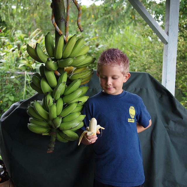 Banana Taste Test #2