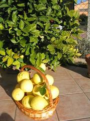 I miei Limoni Giganti