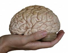 Cérebro Normal por betotester