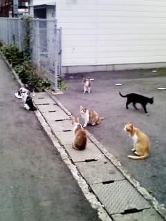 貓的聚會所