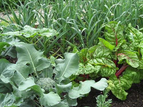 gardendinner
