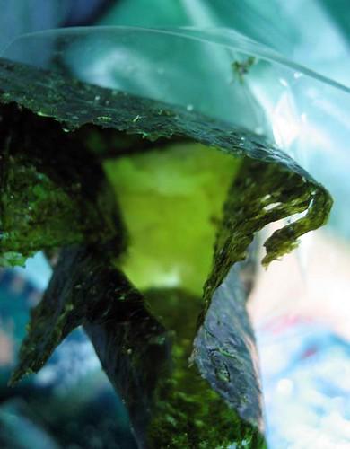 seaweed roll / 海苔捲