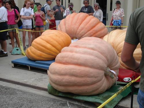 Ginormus Pumpkins