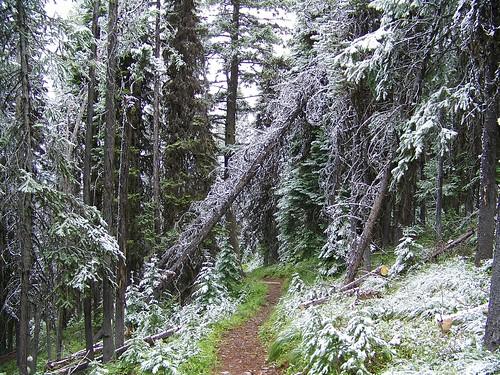 Mout Baldy trail