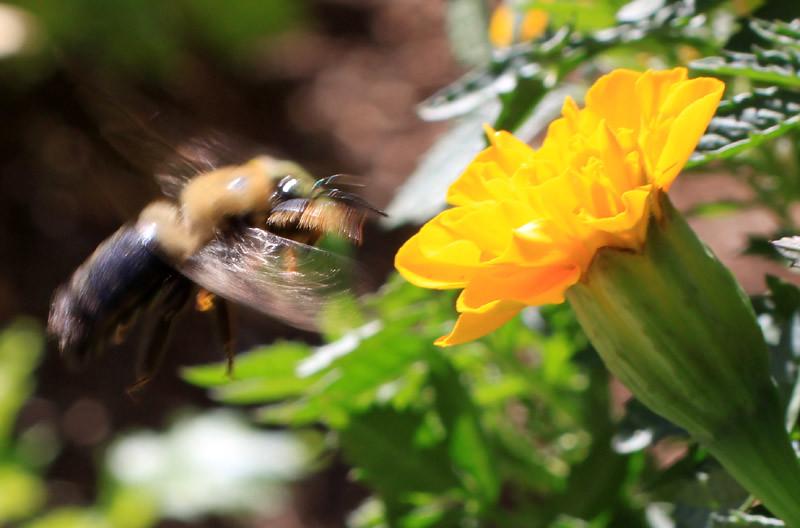 Bee Landing 2