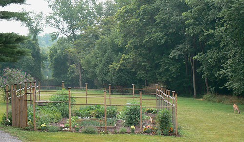 garden view, on a humid summer day