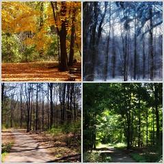 Four Seasons - Fenner Nature Center