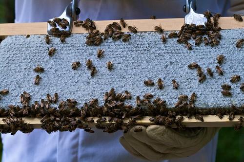 Full Frame of Honey