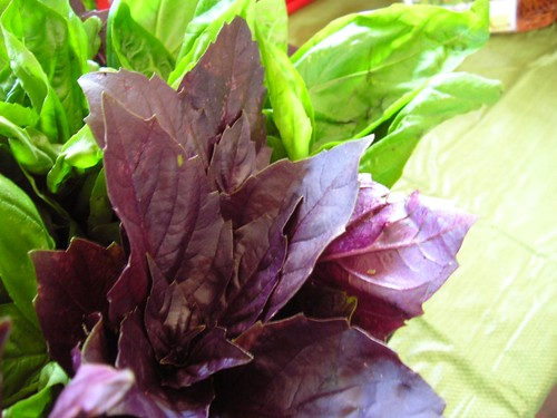 Purple Basil - Use it just like the green variety