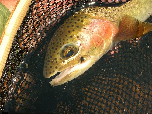 Small Fly=Big Cutthroat