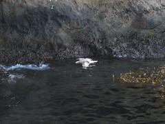 """Dead Floaty Thing,"" Channel Islands"