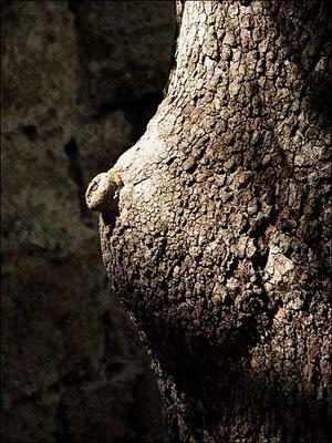 pohon seksi