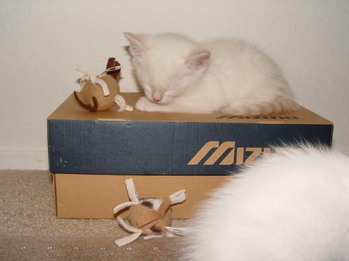 Puddle resting on the shoebox.