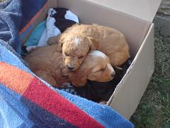 Niedliche kleine Hunde 1