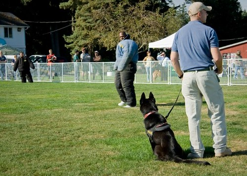 K9 Officer Demos 2009