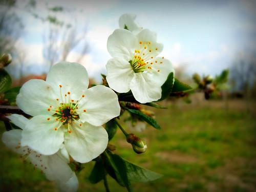 Citate Cu Fotografi : Despre primăvară Şiraguri de g nduri