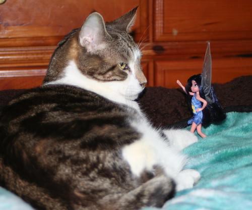 Rabbitt Cat and Silvermist