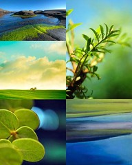 Yellow Green & Blue [Friday Flickr Photo Collage]