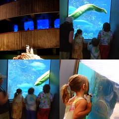 (c) Hilltown Families - New England Aquarium