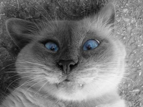 I'm blue tarari tararaaa