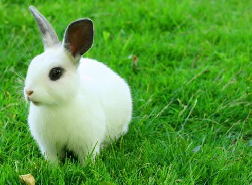 fuzzy-faces-white-gray-bunn