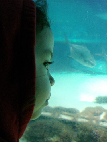 Awed by the sharks