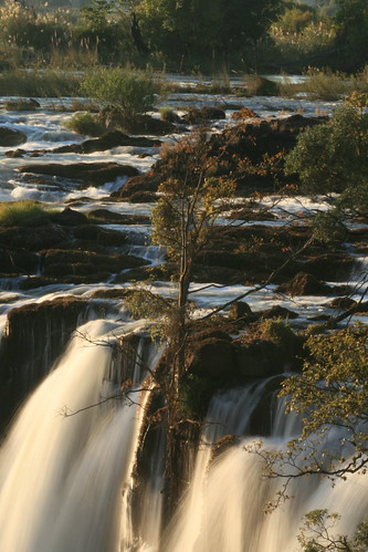 Tree in the falls