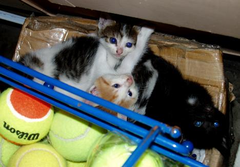 Kittens & Tennis Balls