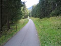 Ciclabile nel bosco