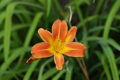 Flor Simplicíssima