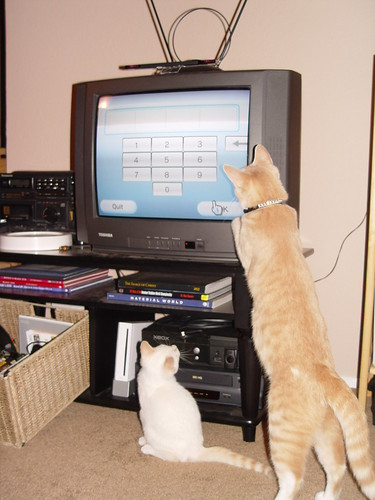 Nutmeg, Puddle, and Wii.