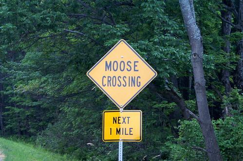 moosecross