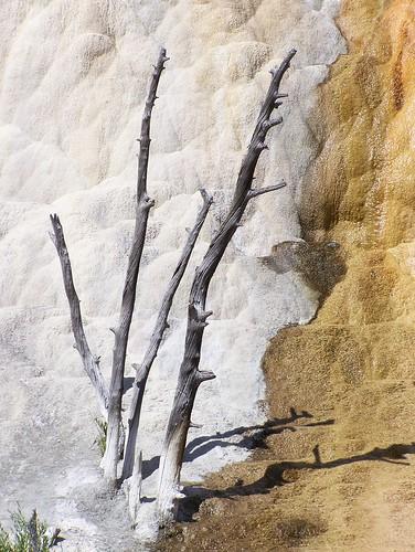 tree orange spring mound